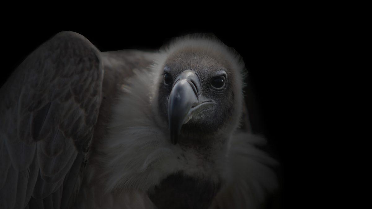 Valkerijworkshops bij het Muithuis en Dutch Hunting Falcons
