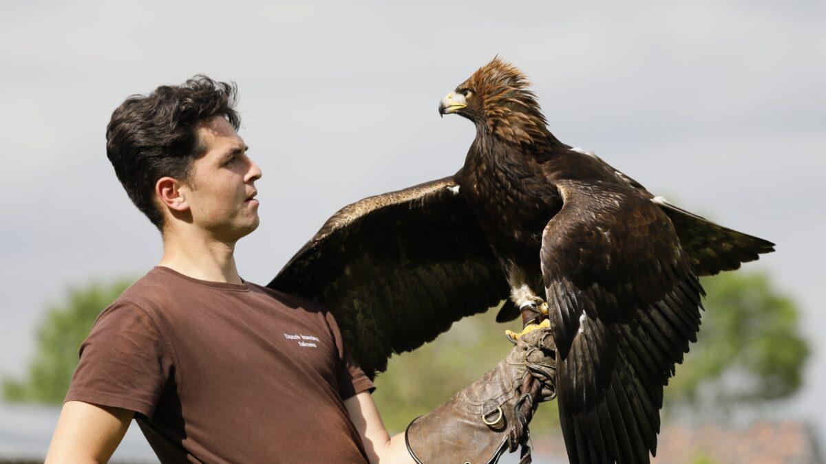 Valkerij workshop roofvogels Het Muithuis