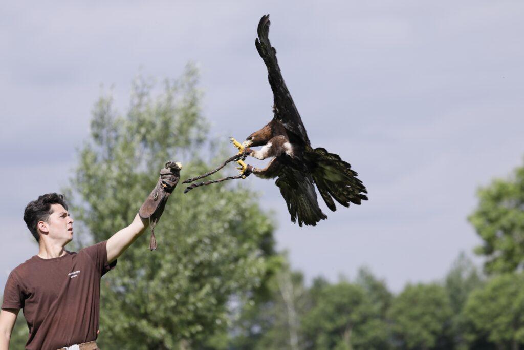 Valkerij workshop roofvogels